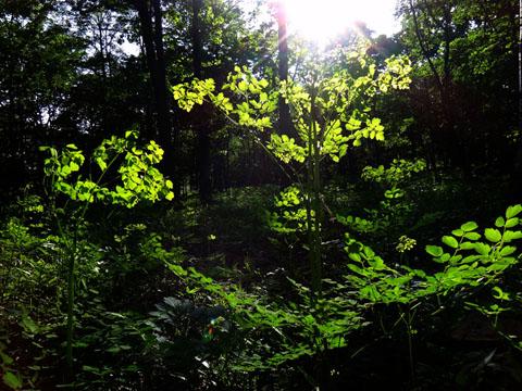 Dsc01194forest_garden